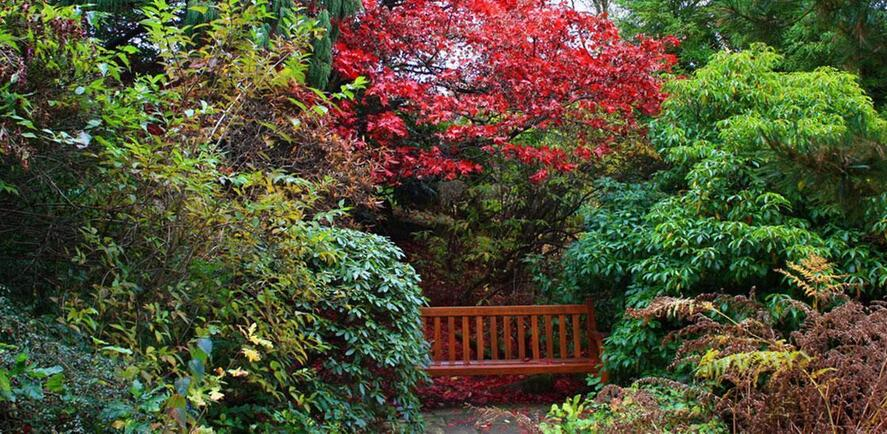 How to get your garden ready for autumn!